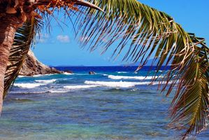 Фото бесплатно тропики, море, пальма