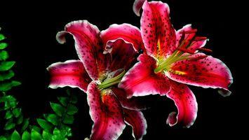 Фото бесплатно цветы, лепестки, красные