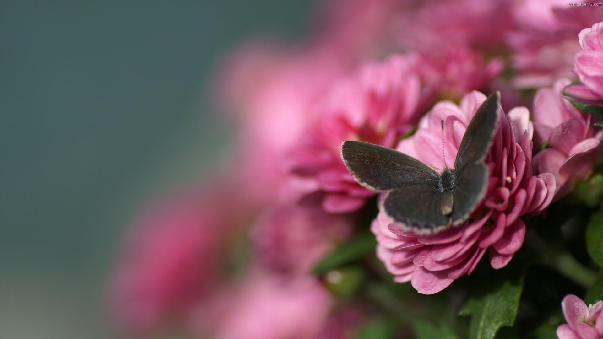 цветы, розовые, листья