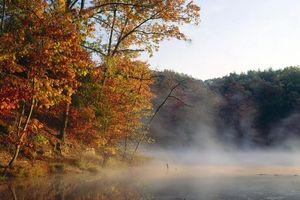 Фото бесплатно туман, вода, лес