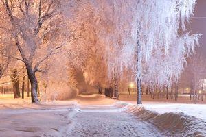Фото бесплатно закат, снег, парк