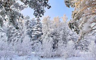 Фото бесплатно сугробы, лес, иней