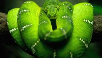 Photo free snake, green, beautiful
