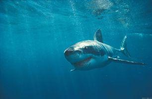Фото бесплатно акула, море, син й