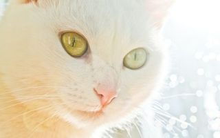 Фото бесплатно моська, кота, белая
