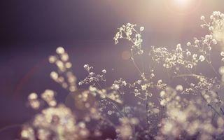 Бесплатные фото цветы, лучи, свет, солнце, сухие, растение