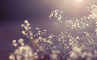 Photo free flowers, rays, light