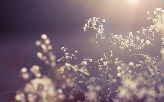 Заставки цветы, лучи, свет