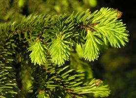 Фото бесплатно ель, ветка, зеленый цвет, праздник, зима, новый год, природа