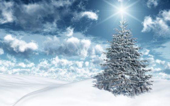 елочка, снег, солнце, светится, красивая