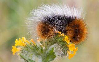 Бесплатные фото гусеница, волосатая, цветок, желтый, стебель, зеленый, насекомые