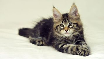 Бесплатные фото котенок,пушистый,морда,глаза,лапы,хвост,кошки