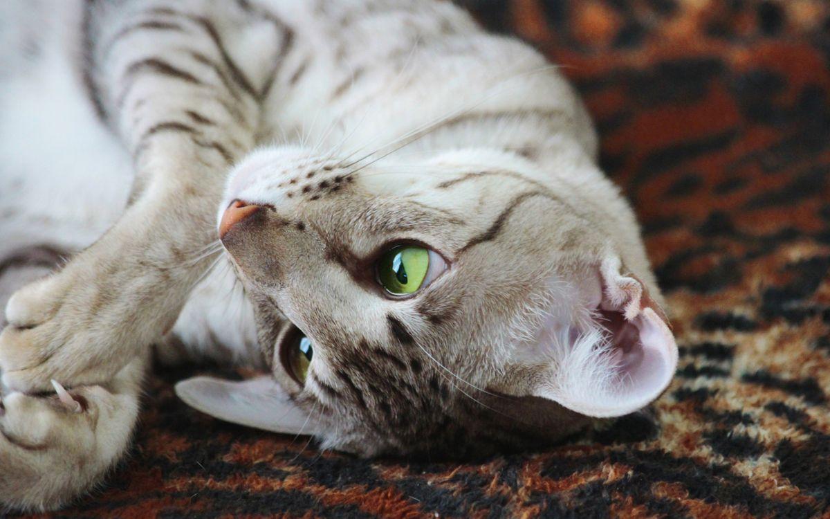 Фото бесплатно котенок, кот, кошка - на рабочий стол