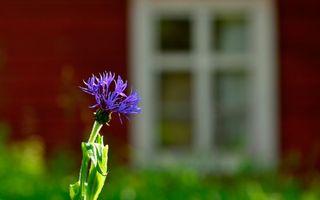 Бесплатные фото лепестки,фиолетовые,стебель,листья,зеленые,фон,окно