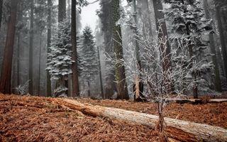 Бесплатные фото лес,мороз,трава,бревно,деревья,иней