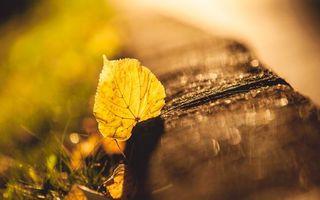 Фото бесплатно листок, листья, осень