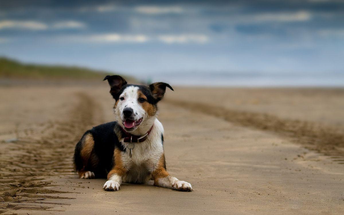 Фото бесплатно собаки, уши, лапы - на рабочий стол