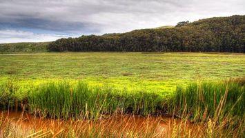 Фото бесплатно поле, трава, вода