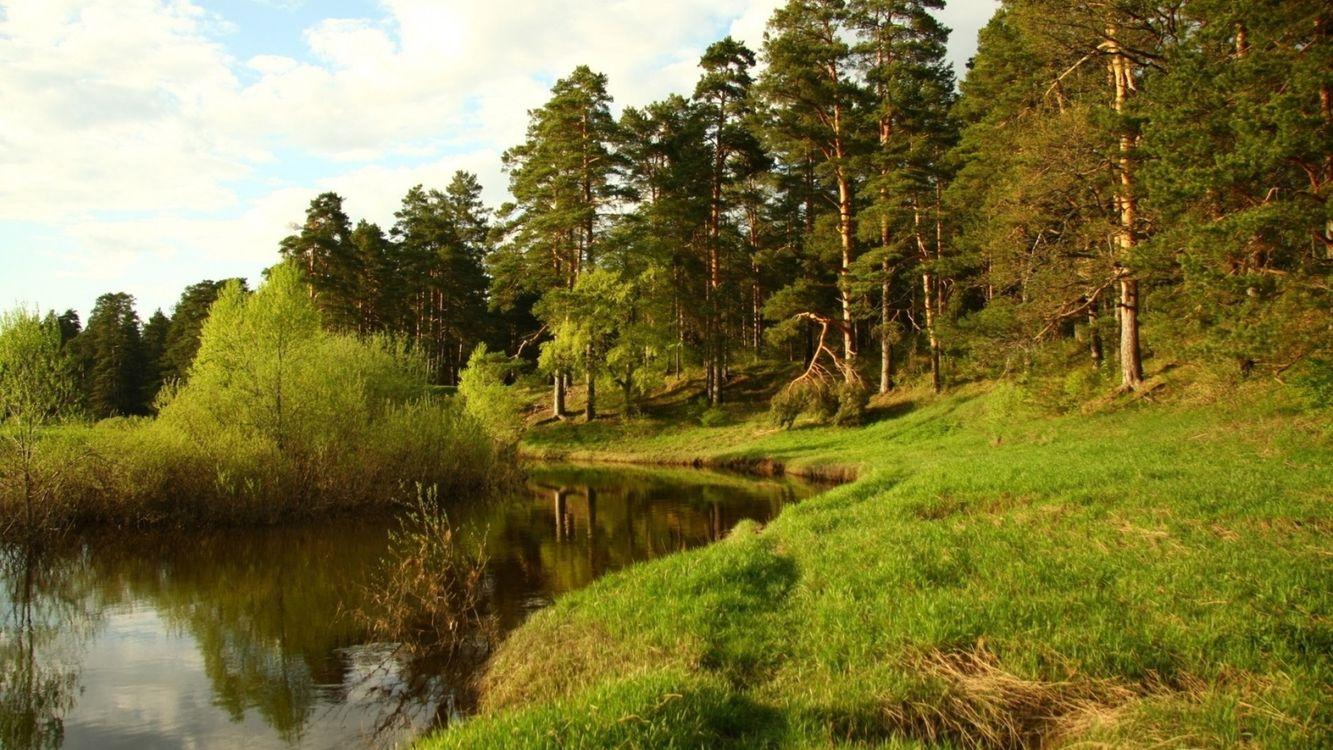 Фото бесплатно река, небо, облака, деревья, лес, трава, берег, пейзажи, пейзажи
