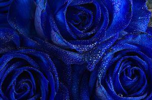 Заставки цветок, капли, макро