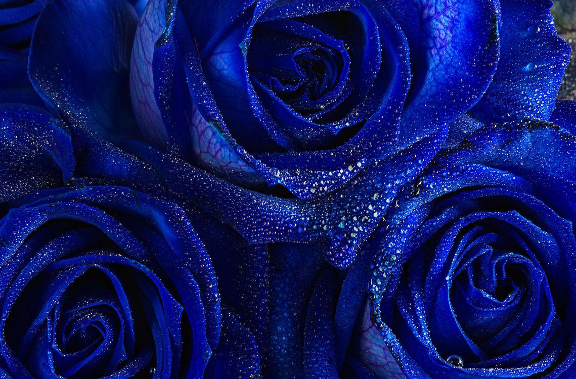 Фото бесплатно цветок, капли, макро - на рабочий стол