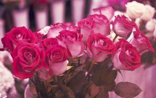 Бесплатные фото розы,лепестки,украшение,стебли,бутон,букет,цветы