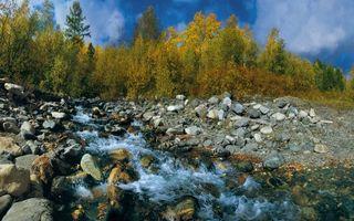 Заставки ручей,камни,деревья,лес,природа