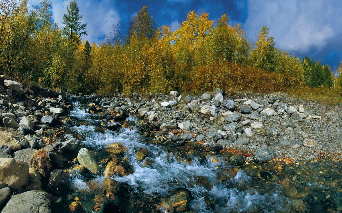 Фото бесплатно ручей, камни, деревья - на рабочий стол