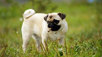Фото бесплатно собака, светлая, морда