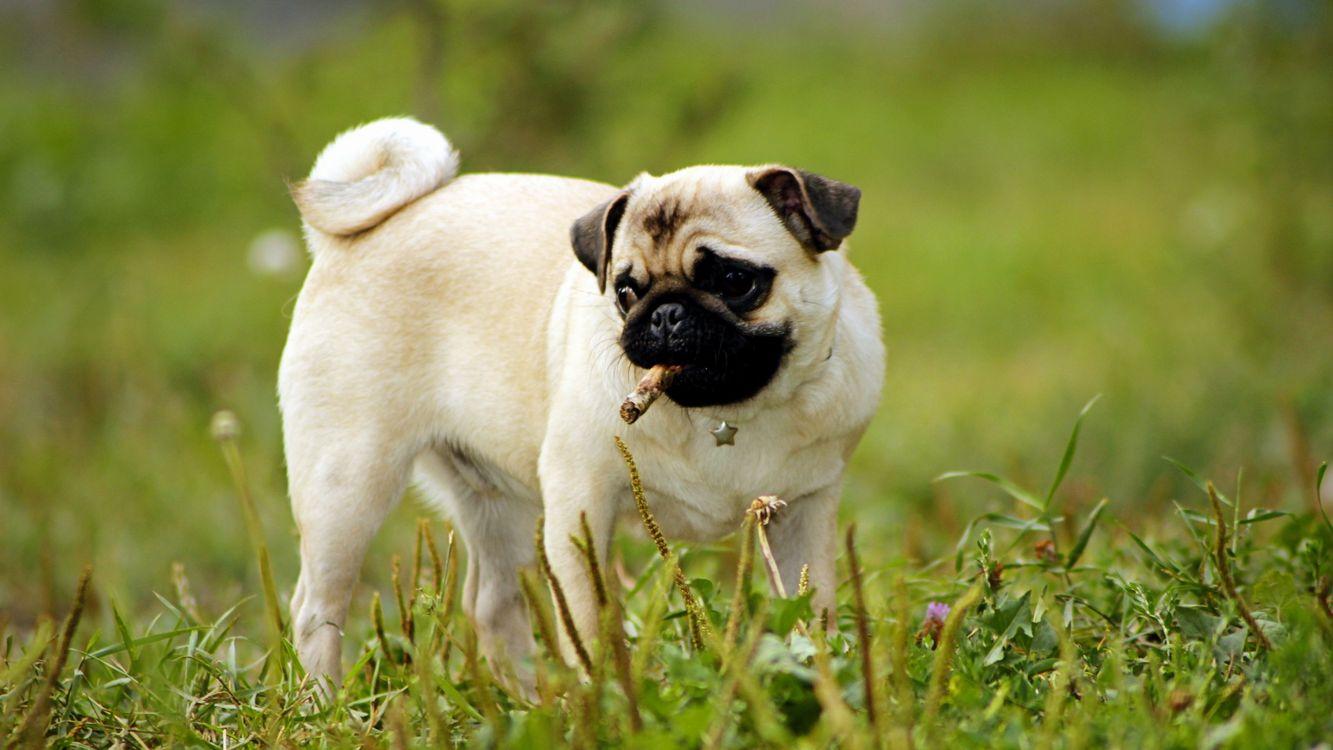 Обои собака, светлая, морда картинки на телефон