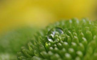 Фото бесплатно трава, зеленая, капля