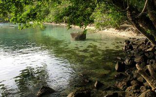 Бесплатные фото тропики,берег,камни,деревья,коряги,море