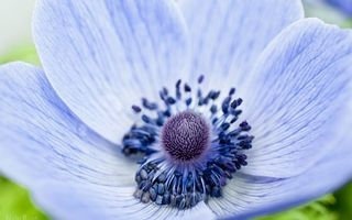 Фото бесплатно цветы, ромашки, лепестки