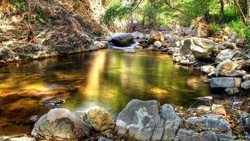 Бесплатные фото вода,лес,деревья,речка,камни,зелень,природа