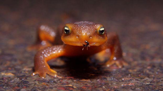 Фото бесплатно ящерица, муравей, ползет