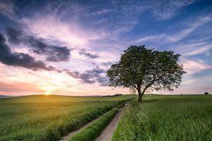 Бесплатные фото закат,поле,дерево,дорога,пейзаж