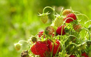 Photo free strawberries, berries, harvest
