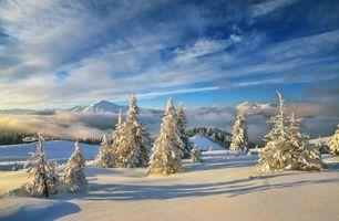 Бесплатные фото зима,снег,лес,туман,горы,пейзажи