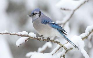Photo free winter, branch, snow