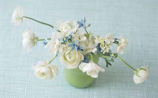 Бесплатные фото цветы,нежная композиция,цветы в вазе