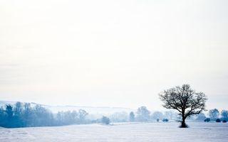 Заставки зима, деревья, небо