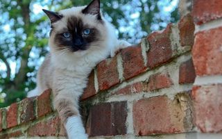 Фото бесплатно кот, на заборе, кирпичном