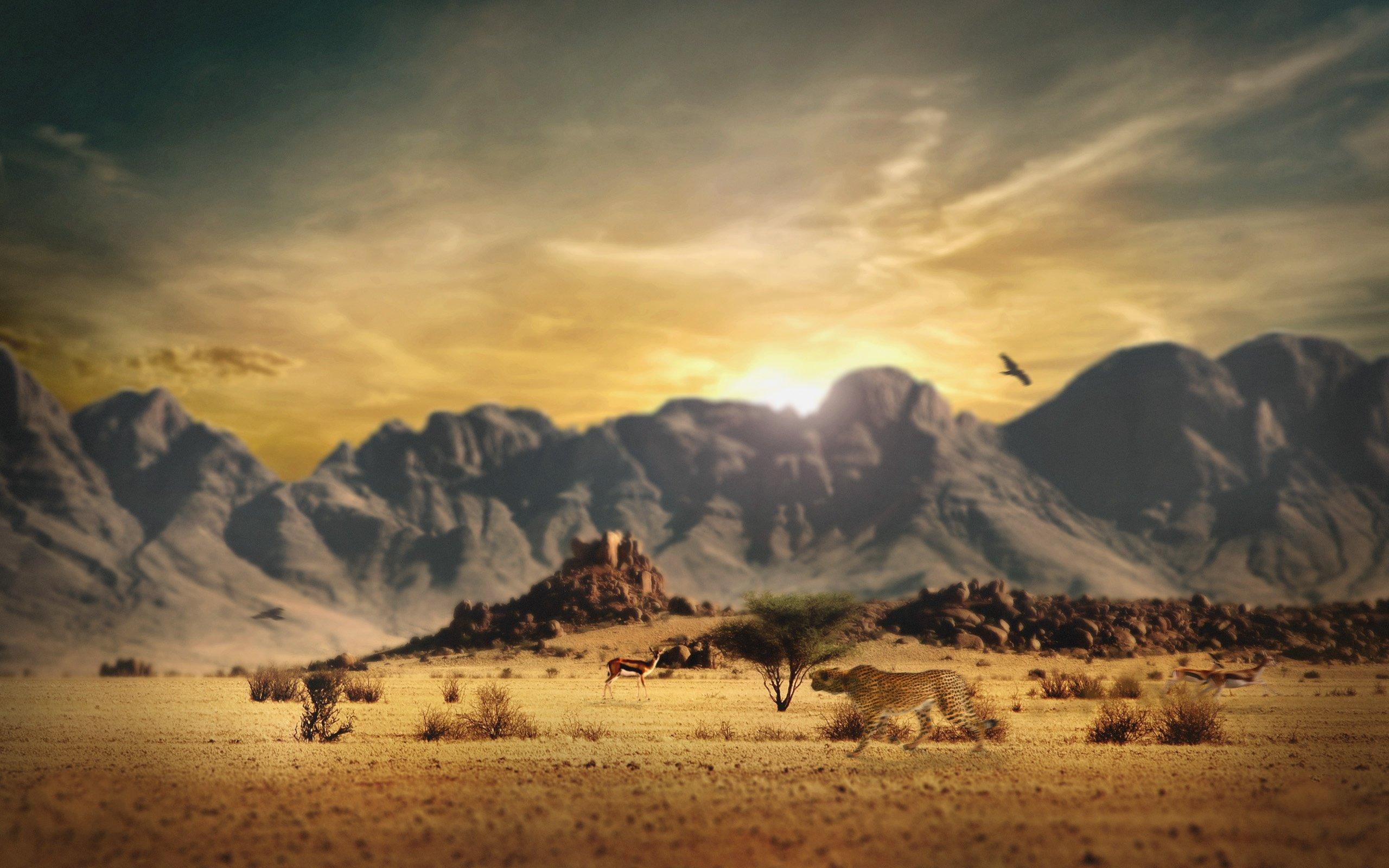 Музыка в пустыне  № 3622281 без смс