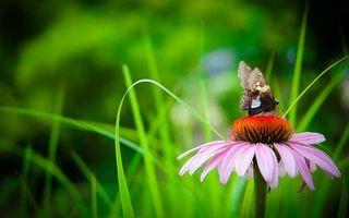Бесплатные фото бабочка,крылья,лапки,цветок,лепестки,трава,насекомые