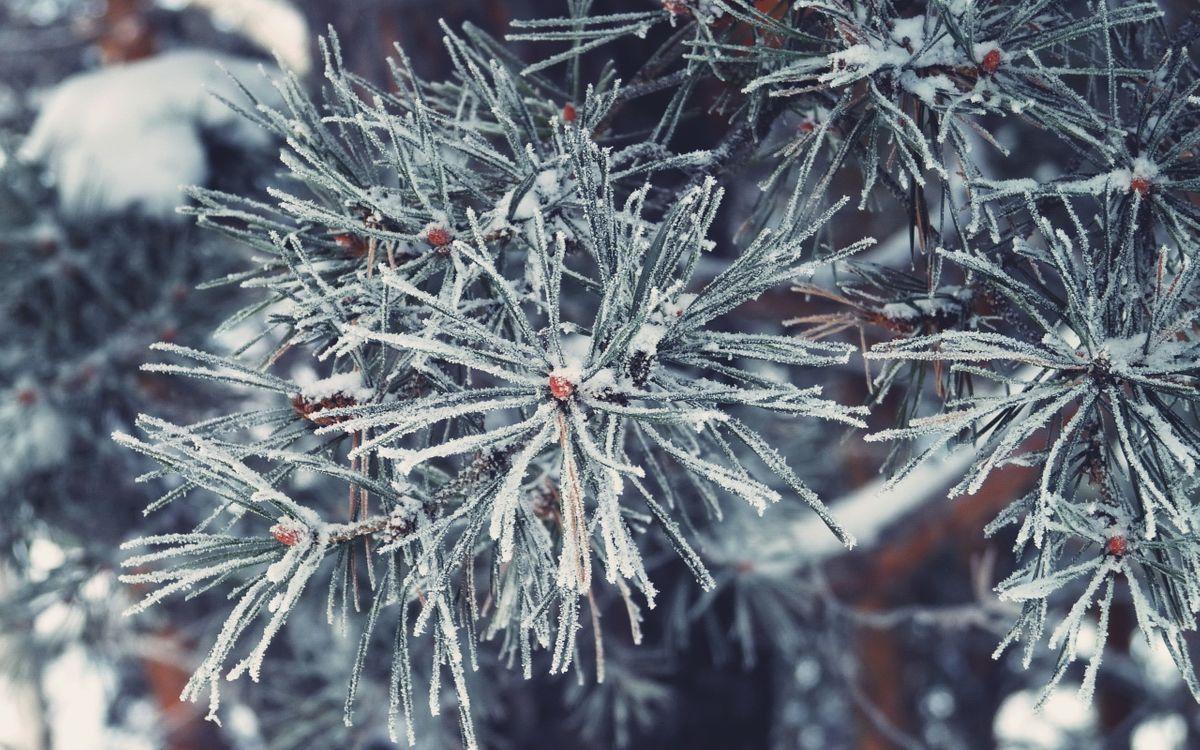 картинки на рабочий стол снег на елках карта зеледеево позволяет