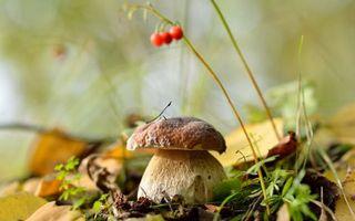 Заставки гриб, ягода, оранжевая, трава, листва, сухая, природа