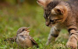 Бесплатные фото кошка,морда,любопытство,птица,крик,защита,ситуации