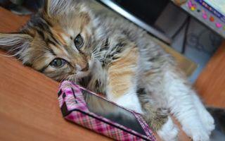 Бесплатные фото кот,котенок,маленький,пушистый,шерсть,телефон,лежит