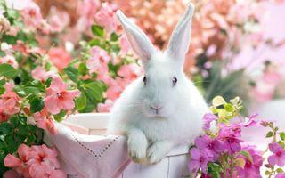Фото бесплатно кролик, цветы, и всё