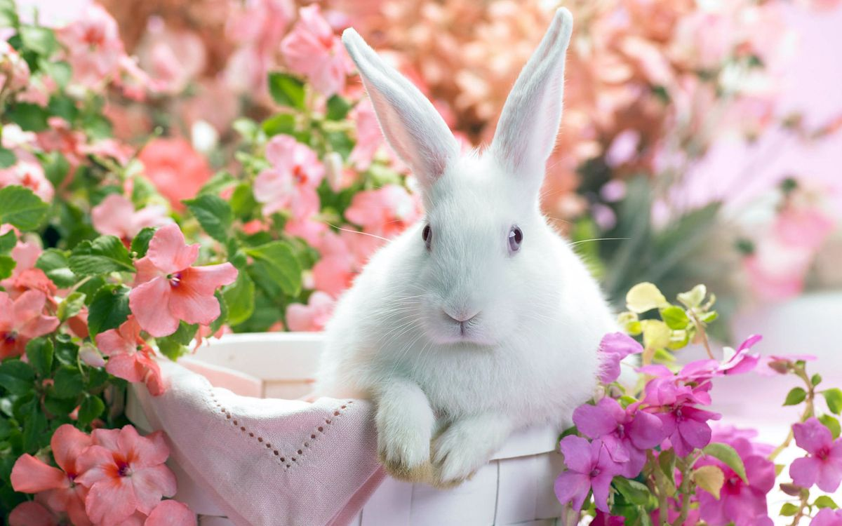 Фото бесплатно кролик, цветы, и всё, животные, животные